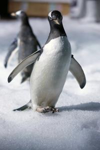 Legoland Pingviner